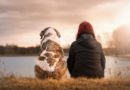 Usual and unusual pets — план урока (Pre-Intermediate / Intermediate)
